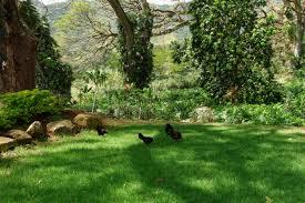 Nice Backyard File Chickens With A Nice Backyard 16974422252 Jpg Wikimedia