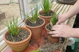 Indoor Herbal Garden 5 Indoor Garden Kits For Any Herb Lover