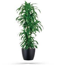 lisa cane office plants