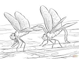 dragonfly coloring pages free printable dragonfly coloring pages