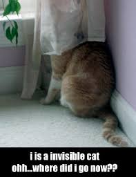 Lolcat Meme - lolcats make you smarter new study claims meme is good for your