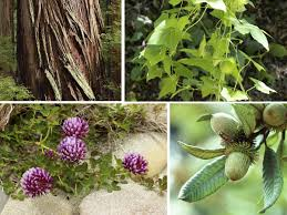 importance of native plants the native plants of the quiroste valley bay nature