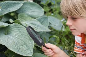 scientific gardening activities using gardens to teach science