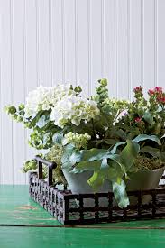 Indoor Plants Arrangement Ideas by Indoor Container Garden Ideas Southern Living