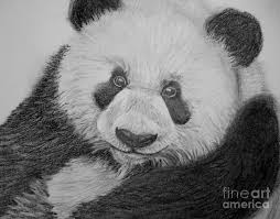 giant panda drawing by patricia wilhelm