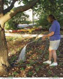 Front Yard Tree Landscaping Ideas Planting Under A Tree Fine Gardening