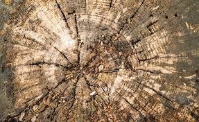 free photo wood log texture wood structure free image on