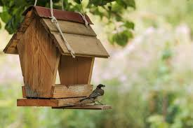 attracting autumn birds to your garden the bird house