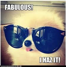 Fab Meme - fabulous dog meme slapcaption com on we heart it