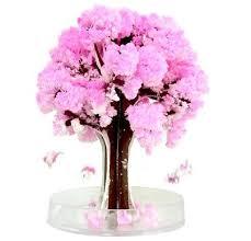 japanese magic cherry blossoms