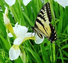 native plants for butterfly gardening benton soil u0026 water terra gardens u2013 nursery u0026 bark