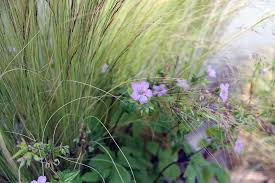 miria harris east london based landscape design garden designer