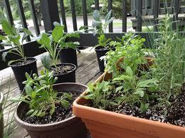 balcony herbs u2013 best balcony design ideas latest