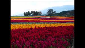 flower garden in japan youtube