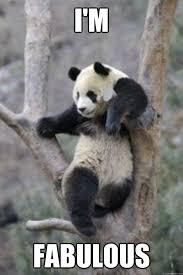 I Am Fabulous Meme - i m fabulous fabu panda quickmeme