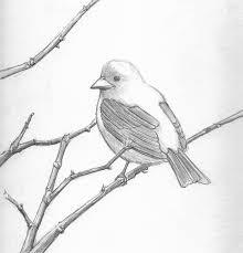 birds pencil image how to draw birds nest stepstep pencil