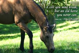 quotes about life s hurdles famous horse quotes advice from a horse take life u0027s hurdles in