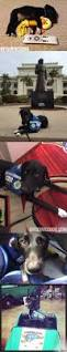 317 best adorable service dogs and training tips images on