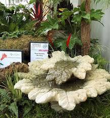 54 best water features images on pinterest plants garden