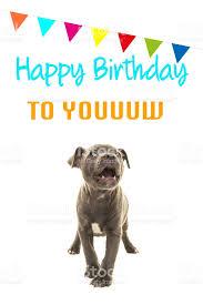 singing birthday grey stafford terrier puppy dog singing happy birthday to you