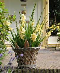 Cut Flower Garden by Best Summer Bulbs For Containers