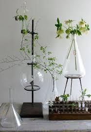 Cool Small Palnts To Grow Best 25 Plant Art Ideas On Pinterest Kitchen Plants Window