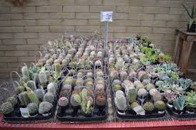 desert native plants living desert u0027s plant sale returns this month score rate desert