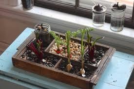 26 mini indoor garden ideas to green your home garden