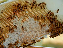 buying organic honey here u0027s what you should know civil eats