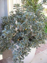 trees are also native plants mother nature u0027s backyard a water wise garden plant of the month