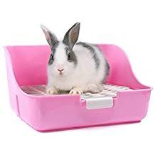 gabbie per conigli nani usate it conigli
