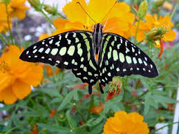 create your own butterfly garden the strong