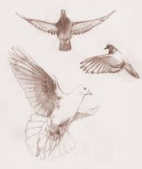the 25 best dove drawing ideas on pinterest white dove tattoos