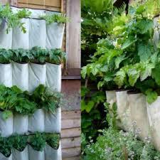 herbs indoors growing herbs indoors carts and tools