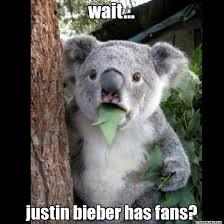 Koala Meme Generator - wait justin bieber has fans koala cant believe it lol meme