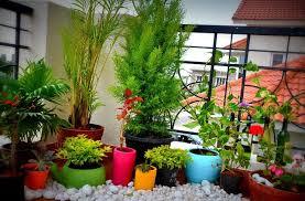 topfpflanzen balkon dachterrasse und balkon bepflanzen freshouse