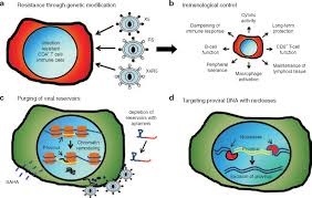 genetically modified hematopoietic stem cell transplantation for