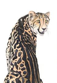 38 best cheetahs images on pinterest animals drawing ideas and