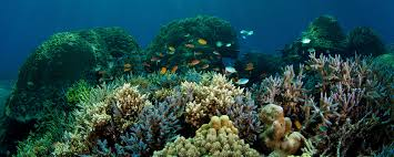 coral reef and fish in wallpaper download 2560x1024