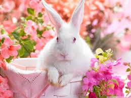 pretty wallpapers for desktop cute easter bunny hd desktop wallpaper high definition