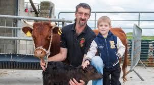 get shorty tiny calf set to enter record books as world u0027s