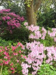 Flower Shrubs For Shaded Areas - best 25 flowering shrubs for shade ideas on pinterest shade