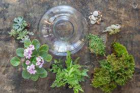 plants native to india terrarium plants choosing the best plants for your terrarium hgtv