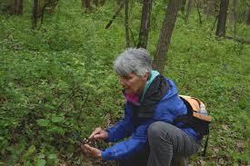 native plants in illinois citizen scientists document illinois plants wglt