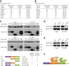 fission yeast pxd1 promotes proper dna repair by activating