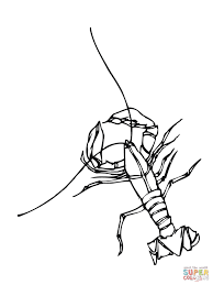 crawfish coloring page funycoloring