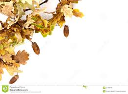 oak tree autumn border royalty free stock photo image 21405785