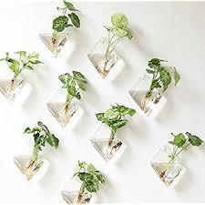 plant wall hangers indoor indoor plant wall amazon com