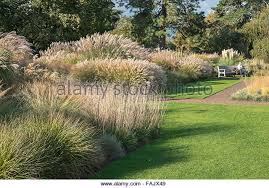 ornamental grass autumn uk stock photos ornamental grass autumn