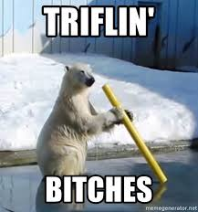 Coke Bear Meme - triflin bitches coke bear meme generator
